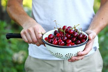 Fresh organic cherry in vintage colander