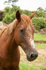 Cavalo IMG_8434