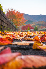 Low angle view on a park path in the morning after rain, with fallen autumn leaves and hills and colorful trees in the background at Fujikawaguchiko, Japan.
