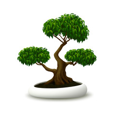 Realistic vector bonsai tree on white background