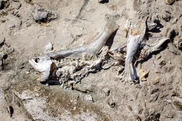 rotten fish in the breakwater