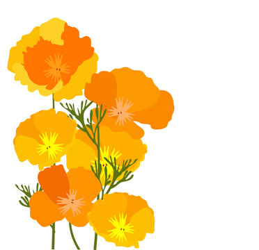 Vector California Poppies