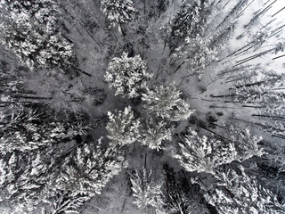 Aerial view of the forest on a cold winter day