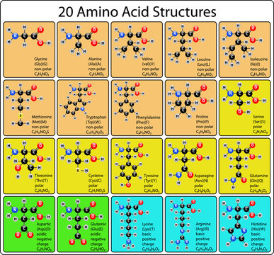 20 Amino Acid Molecules Ball and Stick Structure