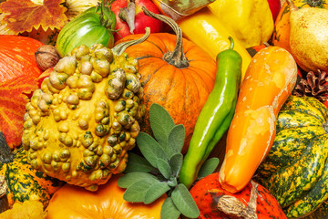 Pumpkins, fruits, nuts  and other vegetables