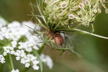 Spinne in einer Pflanze