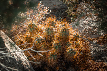 wild desert cactus closeup macro