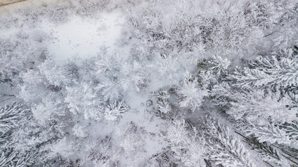 Top down aerial view over the tops of frosty forest. The trees are covered with snow. Directly above view.