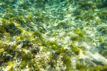 The bottom of the Middle Sea with algae and fish