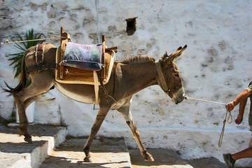 Photo sur cadre textile Ane donkey on the streets of the town of Lindos on Rhodes Island .