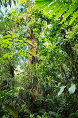 lush green vegetation in tropical Amazon rain forest of Colombia