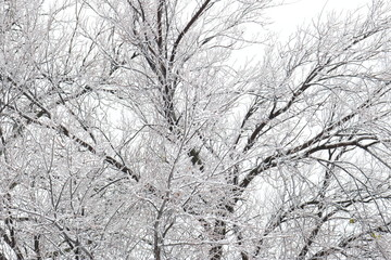 Tree branches covered in ice and snow against a white sky