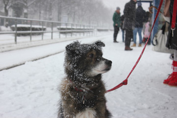 Snow-covered dog at tram station.