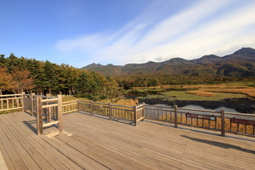 秋の知床五湖の高架木道 ( Wooden elevated boardwalk in Shiretoko five lakes in autumn )