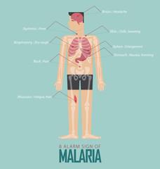 Alarm signs of Malaria infographic in flat design. Malaria disease symptom icon set  with human body, skeleton and organ. Vector Illustration.