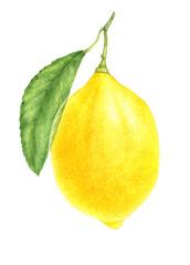 lemon drawing in watercolor