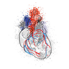 Colorful drawing of human heart