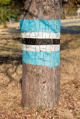 Flag painted on a tree