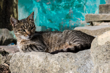 gray-striped cat lying resting with a dismissive look