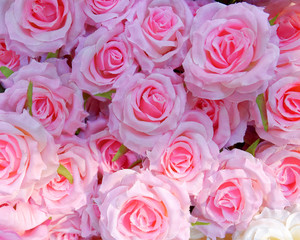 pink fake roses closeup, colorful background