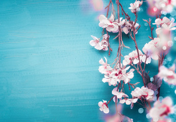 Pretty spring cherry blossom branches on turquoise blue background with copy space for your design. Springtime holidays and nature concept