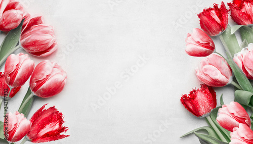 Red tulips on light gray background, top view. Frame. Festive spring flowers. Floral composing. Springtime holiday and greeting concept. Copy space for your design