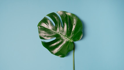 monstera plant pattern isolated, texture top view