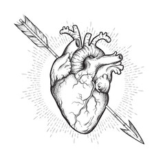 Human heart pierced with cherubs arrow hand drawn line art and dotwork. Flash tattoo or print design vector illustration.