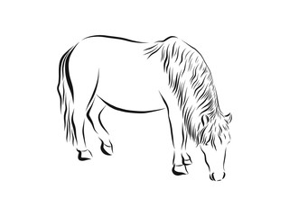 American Miniature horse, black and white doodle sketch vector illustration, hand drawn animal drawing, isolated on white