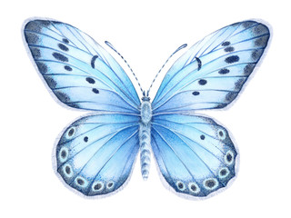 Watercolor blue butterfly. Hand drawn illustration