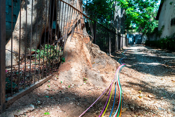 Fibre optice wires over tree roots