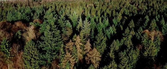 Schleswig Holstein Wald mit Drohne