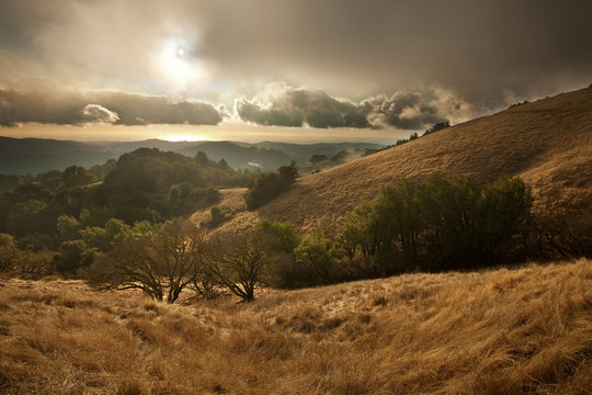 Hillsides of Coastal Central California glisten gold after the season's first rain