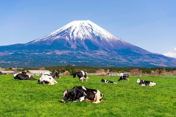 Fuji Mountain and Cow Farm at Asagiri Kogen, Fujinomiya, Shizuoka, Japan Wall mural