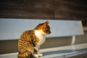 Search Photos Domestic Cat