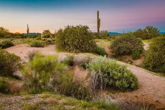 Desert landscape show a long and wide shot of a wilderness area near the McDowell Mountains in Scottsdale, Arizona. Low lying cactus bushes, orange desert dirt, tall saguaro and colorful sky show Ariz