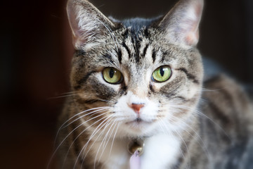 Cat direct stare