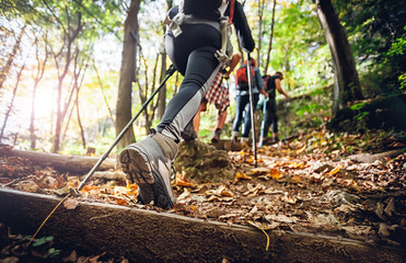 Fototapeta Hiker woman with trekking sticks climbs steep on mountain trail, focus on boot obraz