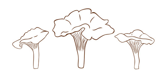 Mushrooms chanterelles in outline style, vector illustration of chanterelles, coloring page for children