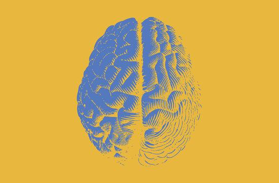 Blue engraving brain on yellow BG