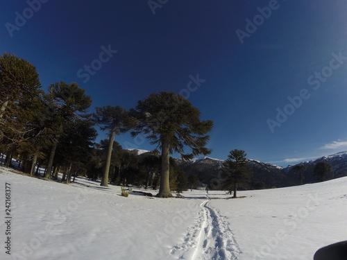 La linea en la nieve de primeros esquiadores al fondo