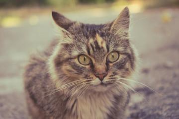 Photo of a beautiful fluffy cat. Pets.