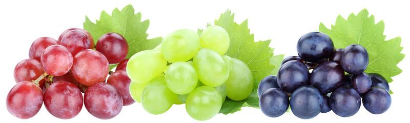 Trauben in einer Reihe Frucht Weintrauben Früchte Obst Blätter Freisteller freigestellt isoliert