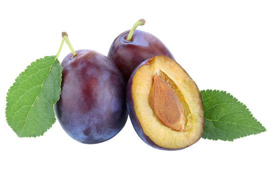 Zwetschgen Pflaumen Zwetschge Pflaume Herbst frische Früchte Frucht Obst Freisteller freigestellt isoliert