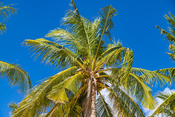 Coconut palm trees on blue sky background. Tropical background of Bulalacao island, Palawan, Philippines