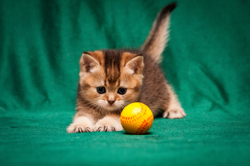 Ginger British kitten playing with a ball sticking his claws on a green background