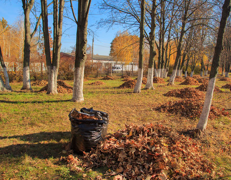 Cleaning of the autumn park. Heap of orange leaves and garbage bag in autumn park