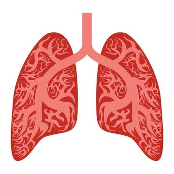 Lungs icon. Cartoon of lungs vector icon for web design isolated on white background