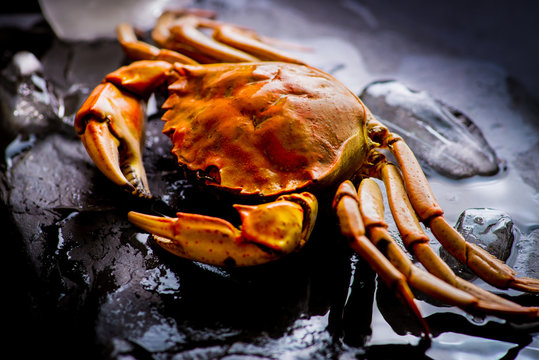 boiled crab among the ice,  close shot
