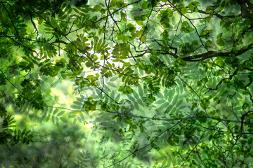 abstract green springtime leaves